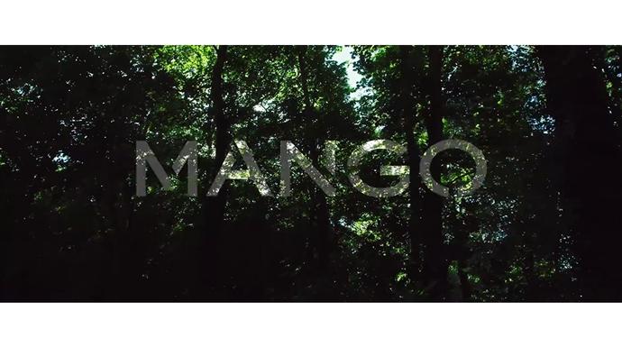 Mango-Autum-17.-2